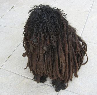 Rasta Pup
