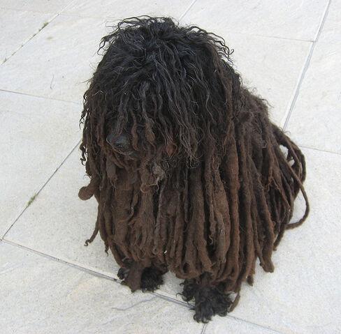 File:Rasta Pup.jpg