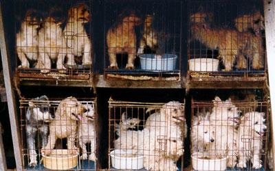 File:Puppy-mills.jpg