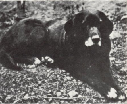 File:St Johns dog.jpg