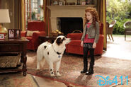 Dog-with-a-blog-march-7-2014-4rdgfbvcbgty