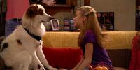Dog Loses Girl