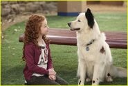 Dog-blog-makeovers-max-stan-stills-05