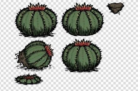 File:Cactus f.jpg