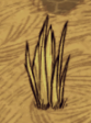 File:Grass tuft growing.png