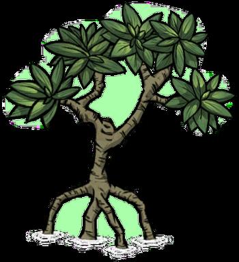 Tree/Mangrove Tree