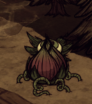 Lureplant-roots.png