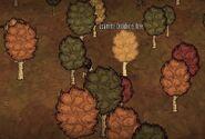 Birchnut Trees autumn
