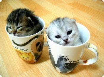 File:Imma cat lady xD.jpg
