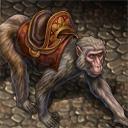 Golden garden macaque