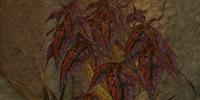 Codex entry: Spindleweed