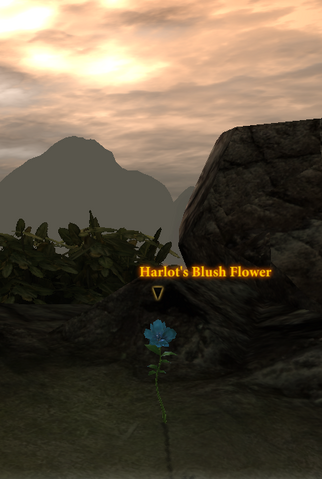 File:Harlot's Blush Flower.png