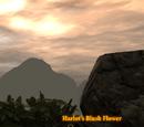 Harlot's Blush Flower