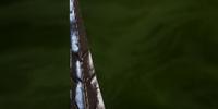 Carta Punisher