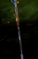 Ornate-Staff-Grip-Upgrade.png