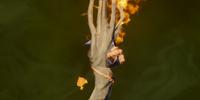 Soulfire Staff