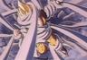 Goku tarped2