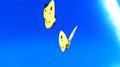 PiccButterflies