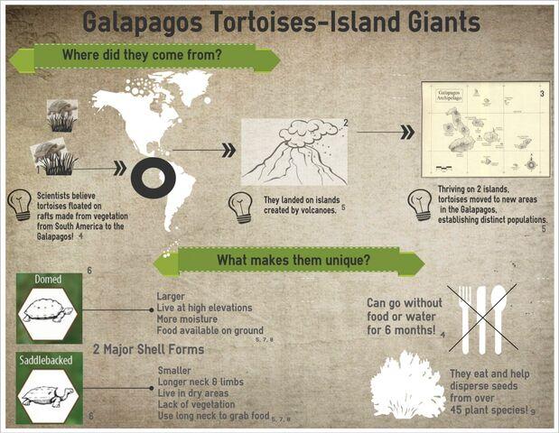 File:Parker Infographic-Galapagos Tortoises.jpeg