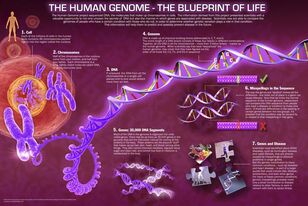 Human-genome-project1