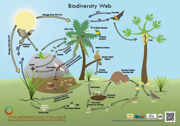 File:BiodiversityWeb.jpg