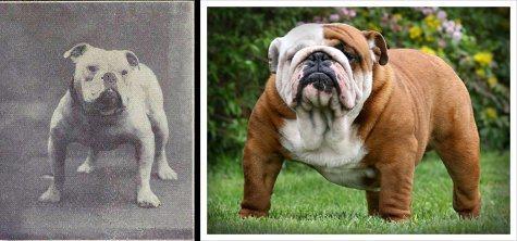 File:Bulldogs.jpg