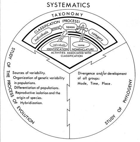 File:Systematics.jpg