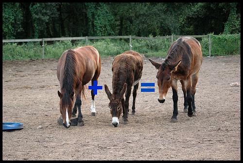 File:Mule.jpg