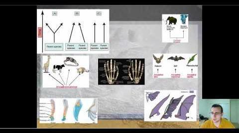 Types of Evolution