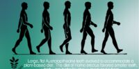 Diet driving human evolution