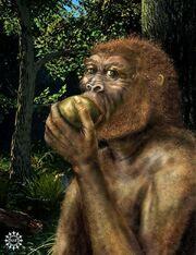 Kate human diet evolution