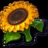 FoodSunflower