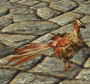 Companion chicken