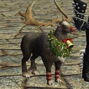 Companion reindeer
