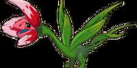 Tulip Dragon