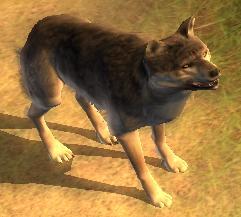 Datei:Wolfi.jpg