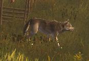 Wilder Hund