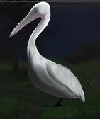 File:Pelican.png