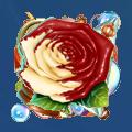 Coll wonderful white rose
