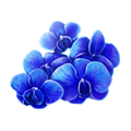 Blue orchid blossoms.png