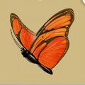Coll butterflies dryad