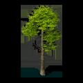 Res pine