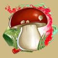 Coll mushroom boletus