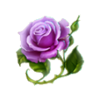 Rose winter garden