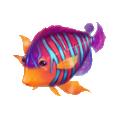 Coll fish royal angel