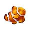 Coll fish clownfish