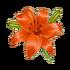 Coll flower fleur-de-lis