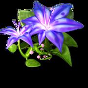 Res azure flower 2