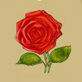 Coll flower rose