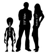 Audrey-grey-and-man-size-comparison